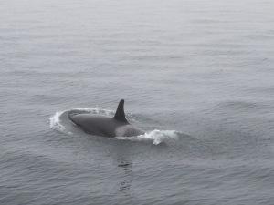 Whale!